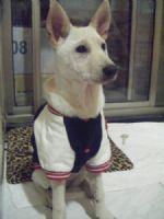 認養~幼犬米克斯~急徵中途or認養人~別讓牠被安樂死_圖片(1)