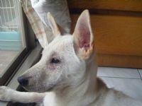 認養~幼犬米克斯~急徵中途or認養人~別讓牠被安樂死_圖片(2)