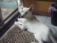 認養~幼犬米克斯~急徵中途or認養人~別讓牠被安樂死_圖片(4)